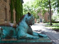 Nassau Hall Outdoor Sculpture Tiger