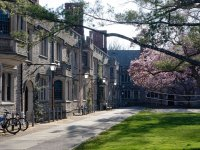 Spring Trees in bloom on Princeton University campus