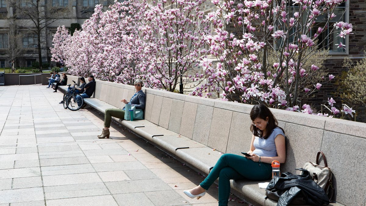 Princeton campus life with students sitting outside by some magnolia trees